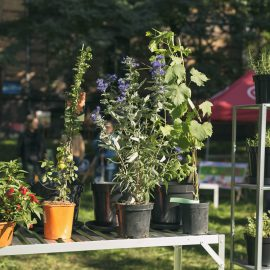 Ogroduwspomnienie_Ogrodemleczenie_sobota w ogrodzie_fot. Alicja Kielan (1)