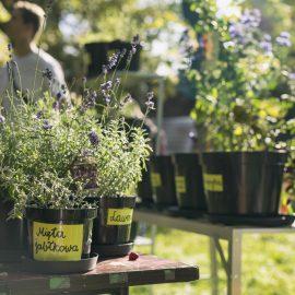 Ogroduwspomnienie_Ogrodemleczenie_sobota w ogrodzie_fot. Alicja Kielan (2)