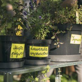 Ogroduwspomnienie_Ogrodemleczenie_sobota w ogrodzie_fot. Alicja Kielan (3)
