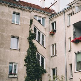 Widok na kamienicę. Budynek ma ściany w kolorze szarym. Część jednej ze ścian porośnięta jest bluszczem lub winoroślą o zielonych liściach.