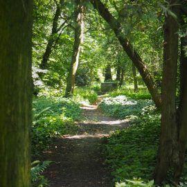 Widok parkowej ścieżki. Dominująca kolorystyka to soczysta zieleń liści drzew i krzewów.